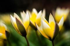 fresh spring /Explore photo by Paul Lapinski