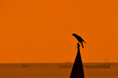 Crow Shadow [EXPLORED] photo by eternal_ag0ny
