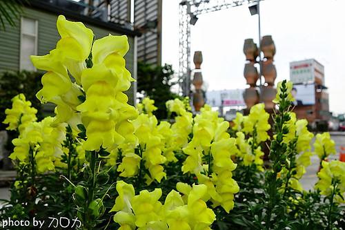 33_台北士林社子台北花卉村