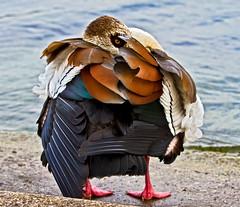 Shy Bird photo by Dave_O1 ~ Dave Edwards