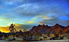 Desert Splendor -- Days End Joshua Tree National Park photo by lhg_11, 1 million+ views! Wow, I'm so grateful!