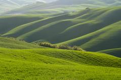 Velluto verde toscano - Green tuscan velvet (Maremma, Tuscany, Italy) photo by ricsen