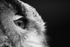 Owl's Eye photo by Ollie Sterne