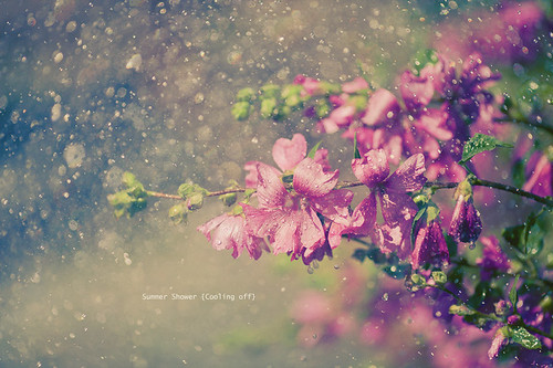 Summer Shower [Cooling Off] photo by Mahoney Photography WA