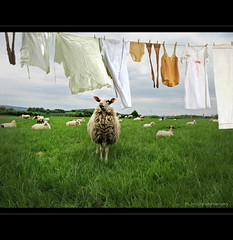 Laundry in Spring photo by h.koppdelaney