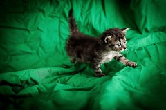 chaton photo by sylvain.landry