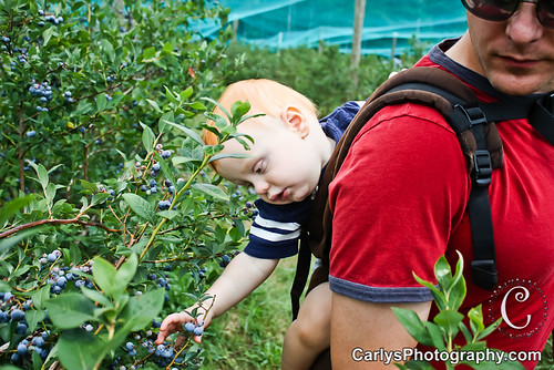 blueberry picking-5.jpg