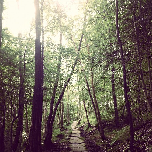 A forest path #c2c #latergram