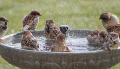 Splish Splash ~ Having a Pool Party ~ Everyone is Invited! photo by Tony Tanoury
