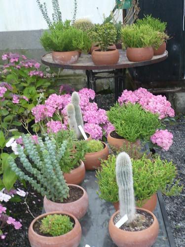coupe de succulente ou de cactus