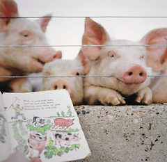 story time for piglets photo by manyfires