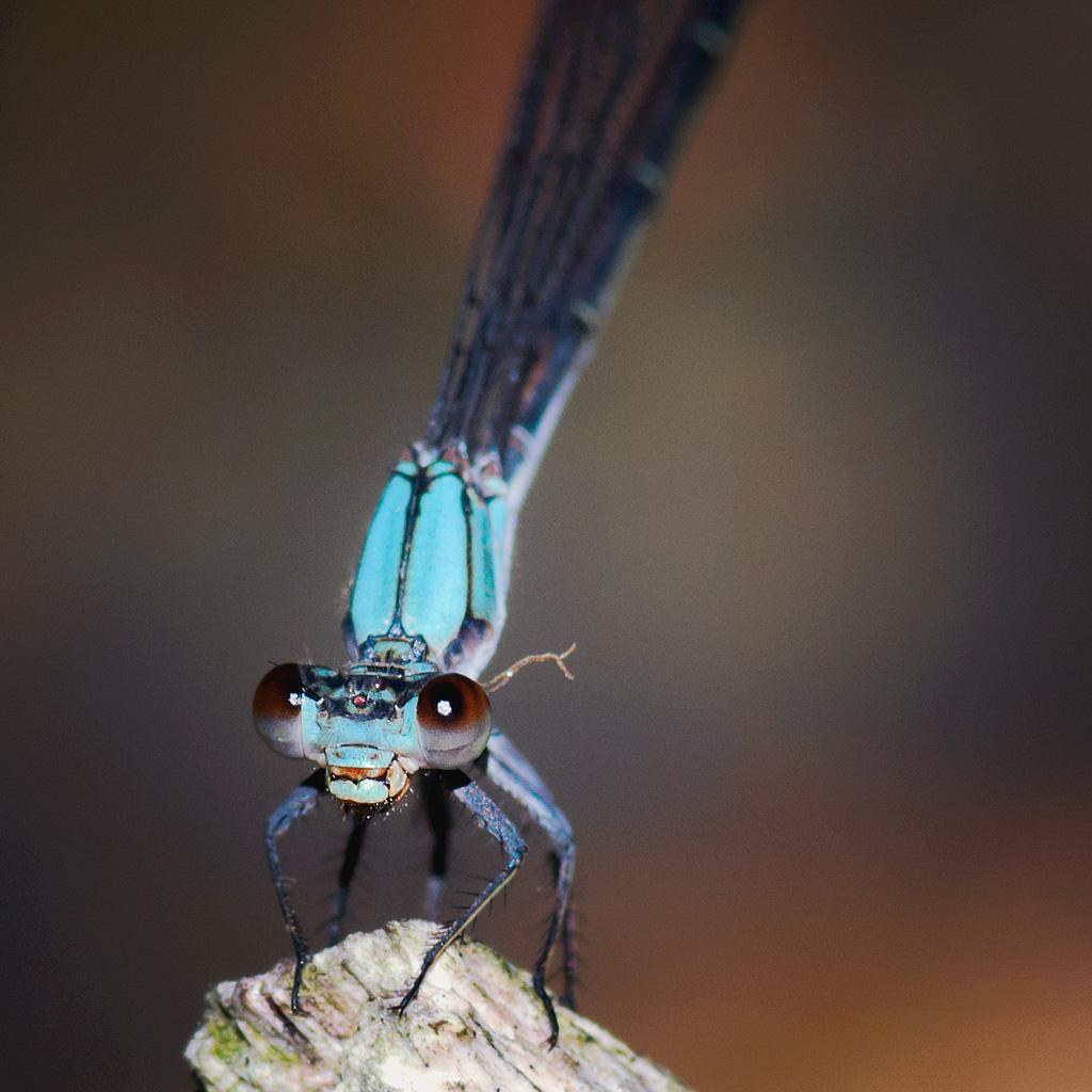 The Damsel flies... photo by rsc_escher/slowed by hard drive crash...