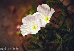 Beautiful flower photo by 娜 娜☂Nana