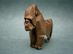 Gorilla photo by mitanei