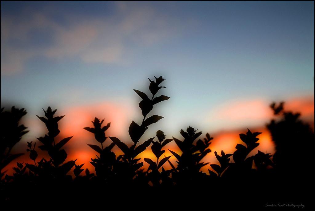 A Beautiful Summers Night photo by SmokinToast