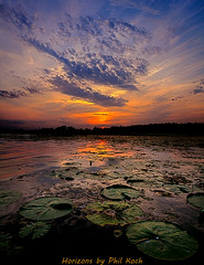 Pads photo by Phil~Koch