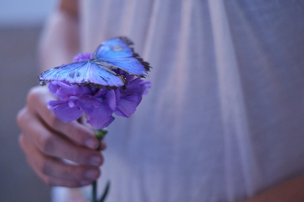 Loveliness....(273/365) photo by *amanda lynn