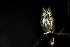 Owl photo by JGC Photography
