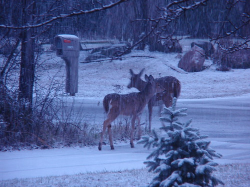 Deer Sighting on a Snowy Morning