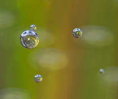 Bubble Orbit photo by geometricsprocket