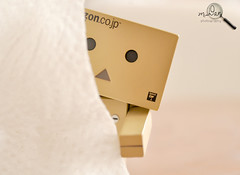 Danbo is too shy to say hello. photo by ruxxnaqvi (MisDan)