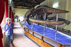 Sacred Whale Skeleton at Van Thuy Tu Temple photo by Points-of-View