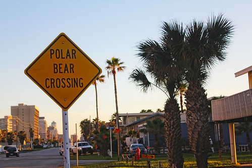 Polar Bear Crossing