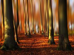 Autumnal Vision photo by Batikart