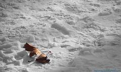 Foglie sulla neve photo by Stefano Guastalegname