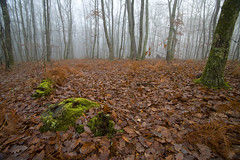 Autumn undergrowth photo by JR-pharma