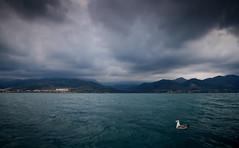 Au large de Gouraya , Algérie (Algeria) photo by albatros11