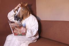 horse  28/366 photo by horsesqueezing