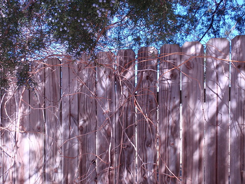 Fence with Trees and Shadow
