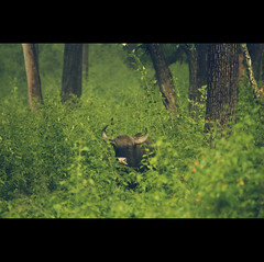 The Beast in the Bush photo by VinothChandar
