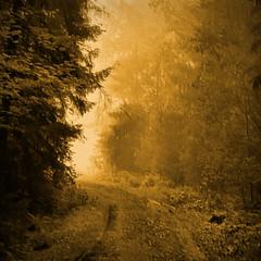 Towards Light photo by Raf...
