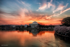 Glorious Sunrise at Jefferson Memorial (AS3A8878-sig) (Honorable Mention, FotoWeekDC 2014 Cherry Blossom Photo Contest) photo by Scott Fracasso Photography