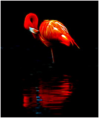 Fractal Flamingo photo by Steve Wilson - over 6 million views Thanks !!