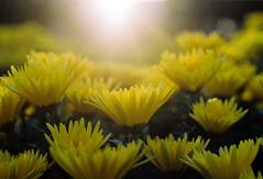Spring Sunshine photo by Khánh Hmoong