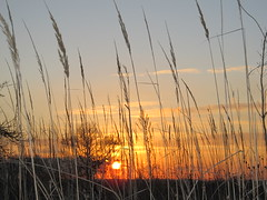 Sunset grasses photo by mazzy43