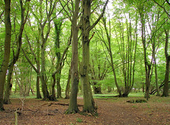 Hatfield Forest photo by Speed of Light [2]