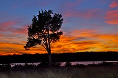 Portrait of a Lone Tree at Sunset photo by margaret mendel