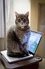 Cat-like typing photo by jonasflanken