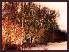 Winter River Tree: Yellow and Brown photo by Tim Noonan