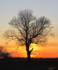 Tree silhouette photo by mazzy43