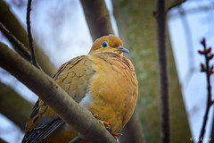 A Dove photo by JustBeingMeee