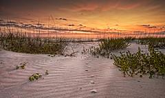 Sunrise at the sand dunes. (Primera luz en las dunas) [Explored] photo by Photo by Sammy