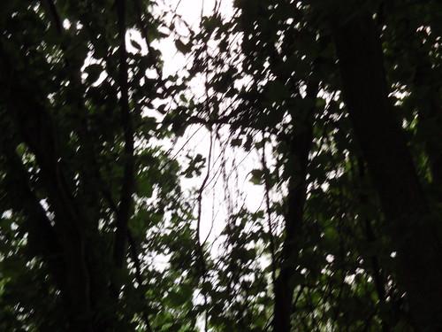Fuzzy Woods