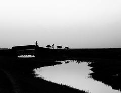 শেকড়... photo by পথের শিল্পী™ ...
