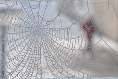 Captured in a winter's web... photo by Julka2009...(mostly off)