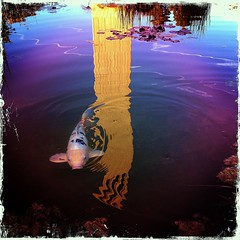 A fishy reflection photo by RobertCross1 (off and on)